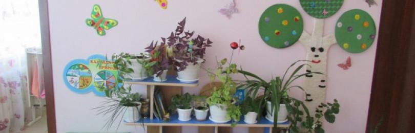 Организация уголка природы в детских садах по ФГОС