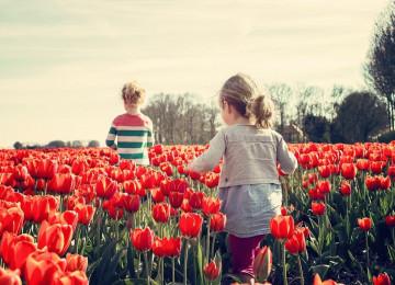 Формы, методы и средства экологического воспитания
