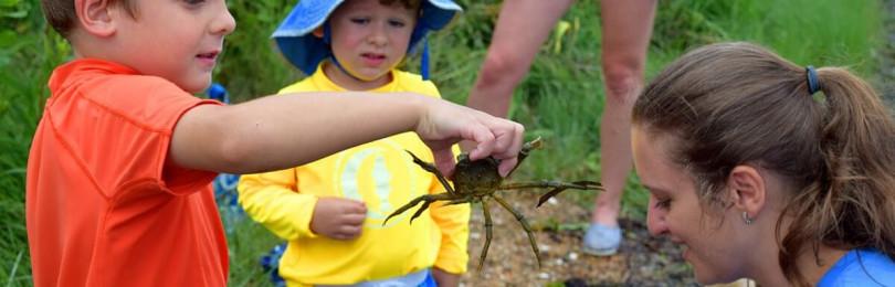 Экологическое воспитание в школе с учетом ФГОС