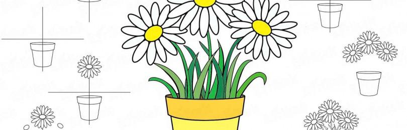 Уроки рисования в старшей группе на тему «Комнатные растения»