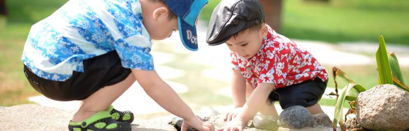 Цель и задачи экологического воспитания