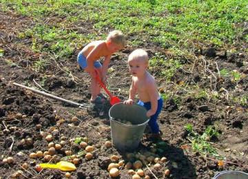Методы и формы трудового воспитания