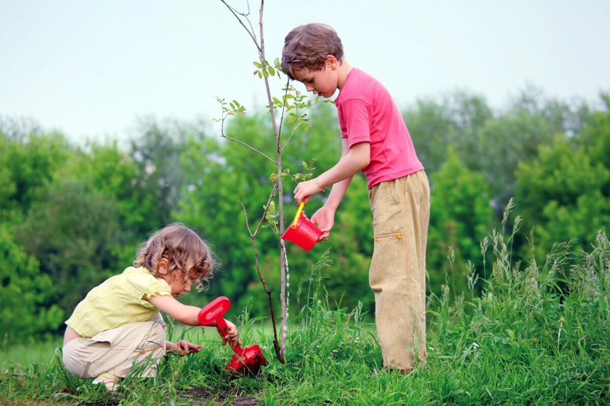 Дети сажают деревья
